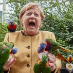 Папагал нахапа Ангела Меркел